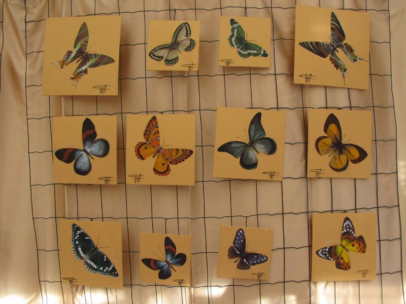 les-papillons