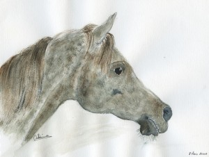 gris pomelé